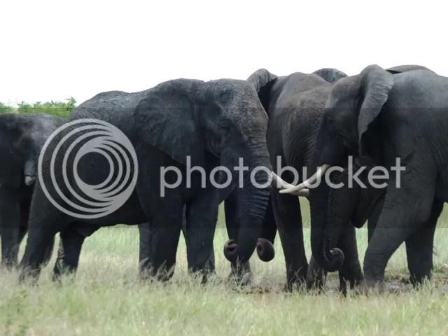 photo ElephantconferenceatMooiplaas_zps1bde6302.jpg