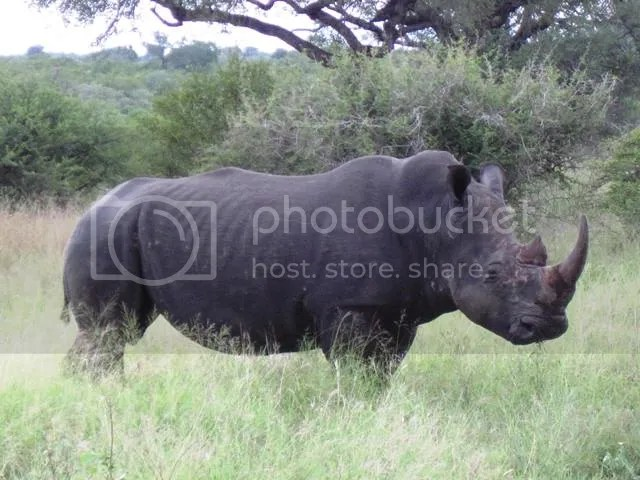 photo Part5_Battered_old_soul_white_rhino_zps4073389e.jpg