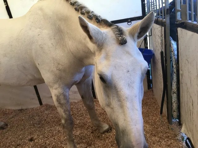 Ollie not impressed with pretty braids. Ollie want snack.