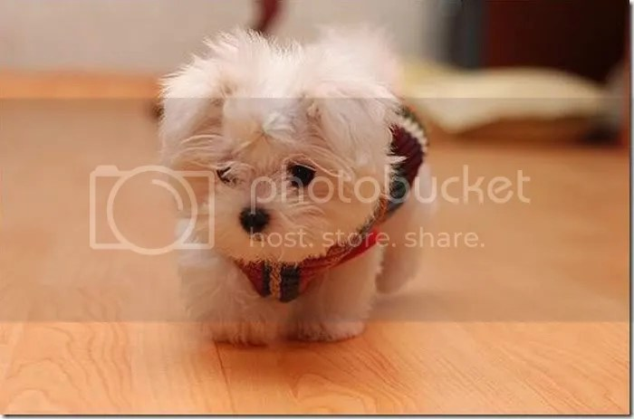 Pictures of Cute Baby Animals 17