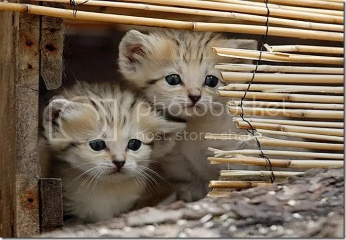 Pictures of Cute Baby Animals 1