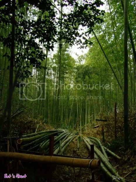Arashiyama natural bamboo forest