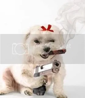 dogwithgun.jpg dog with gun image by cayenegirl