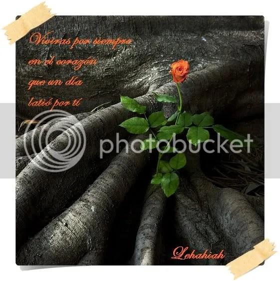 rosanaranja.jpg picture by leha67