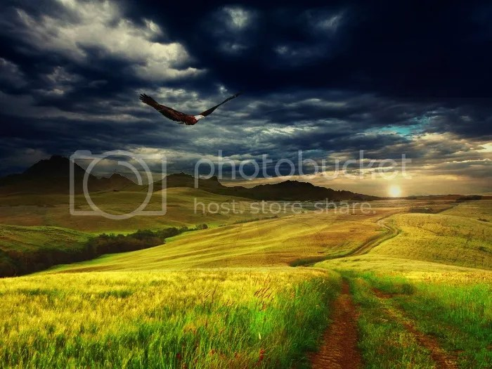 Aquila in volo libero - Amiche di fuso