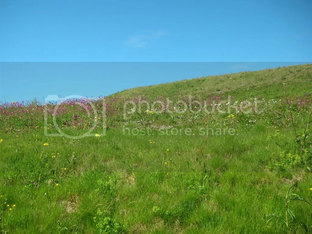 Field of mountain flowers