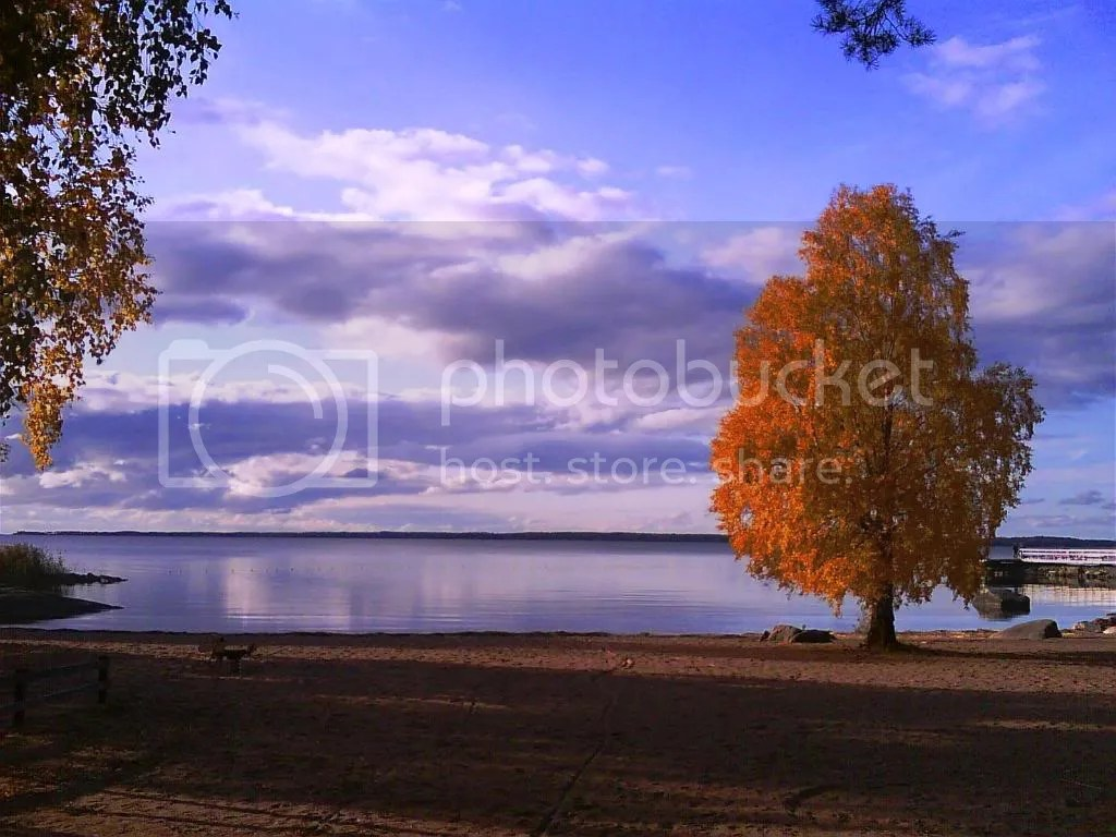 Golden leaves on the shores of Vänern