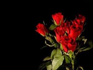 photo BouquetofRoses.jpg