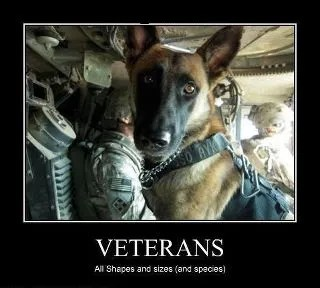 photo VeteranDog_zps67b49ac6.jpg