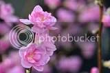 photo DSC_2602.jpg