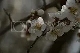 photo DSC_2865.jpg
