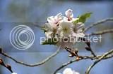 photo DSC_4879.jpg