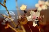 photo DSC_1351.jpg