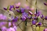 photo DSC_5532.jpg