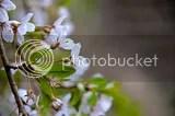 photo DSC_5572.jpg