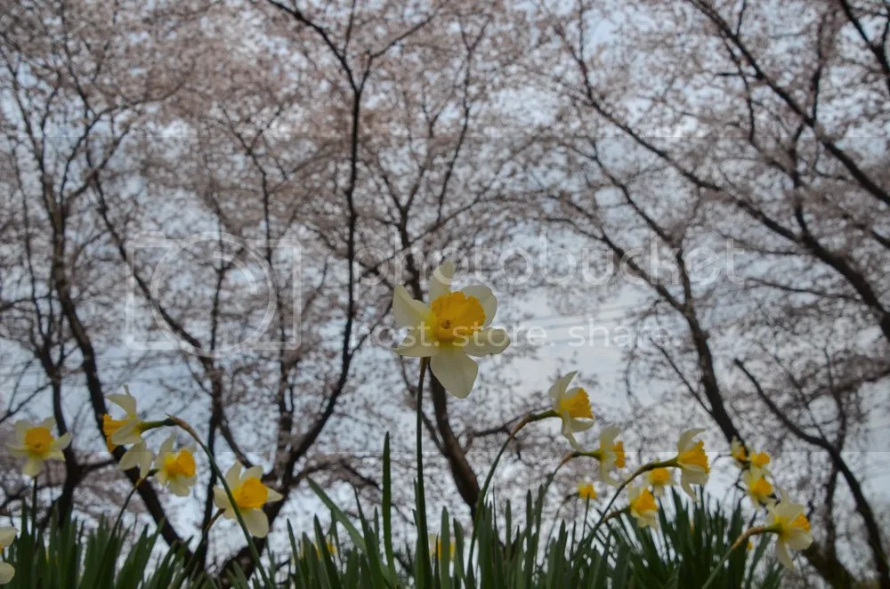 photo 20160403_fujioka_12.jpg