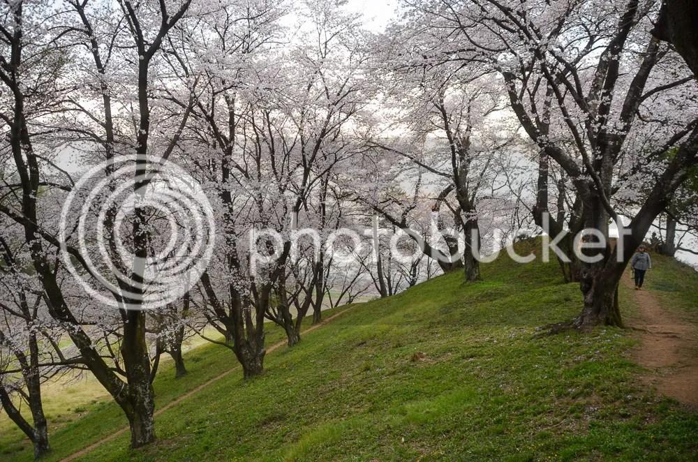 photo 20160403_fujioka_15.jpg