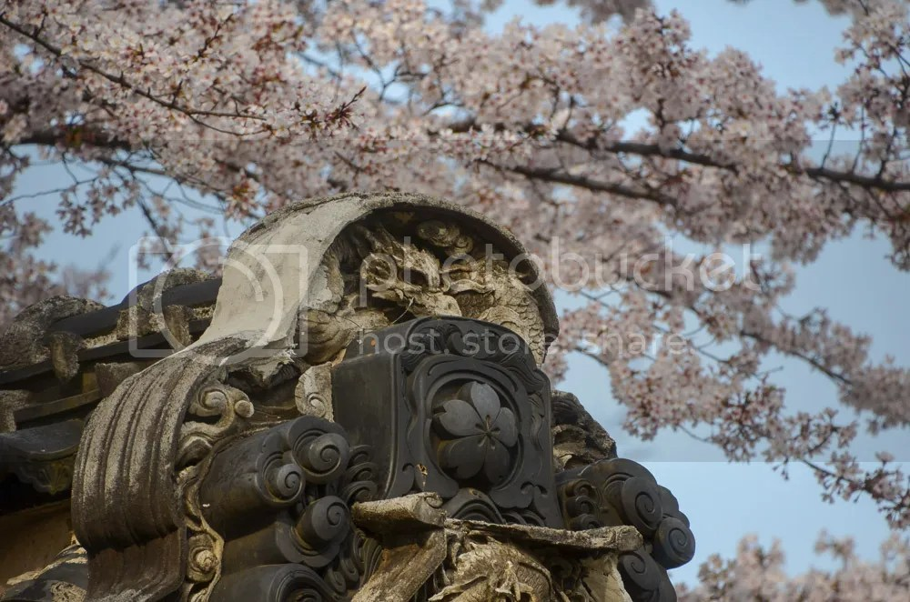 photo 20160403_fujioka_16.jpg