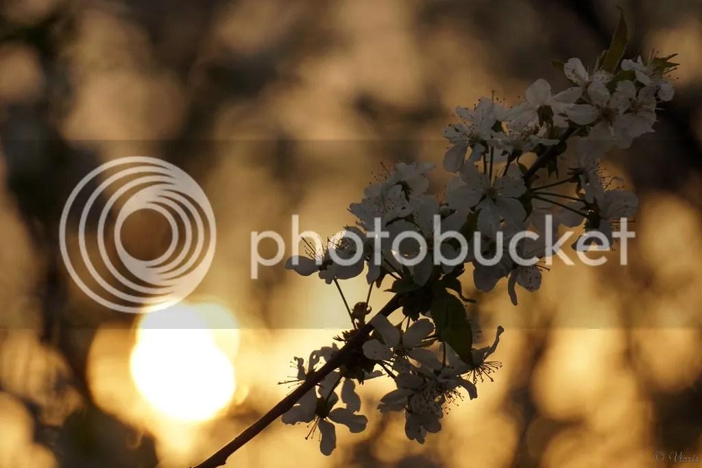 photo DSC05634.jpg