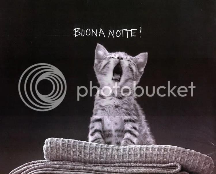 micioNotte.jpg Buona Notte! image by rolando_83