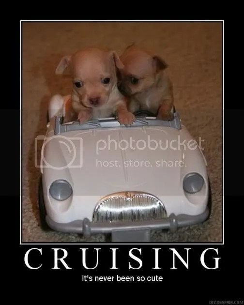 CutePuppyCruisingCarDogAdorable.jpg