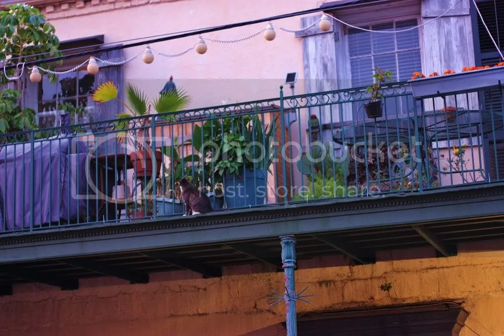 balcony on frenchman st. w/ kitty cat Pictures, Images and Photos