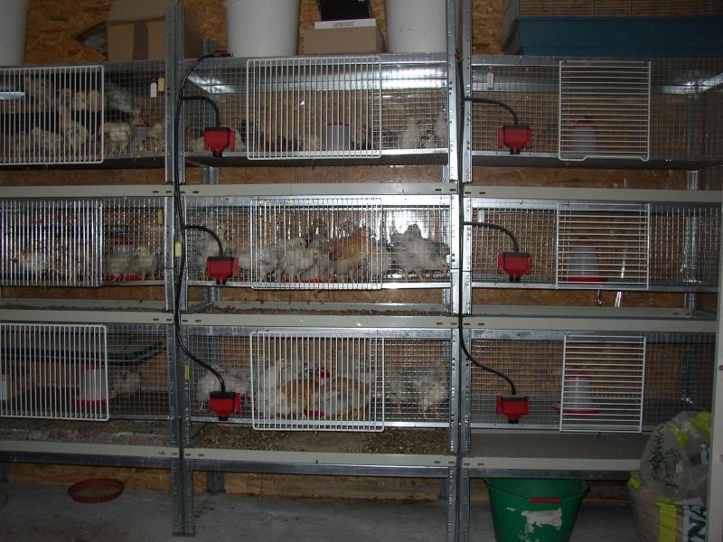 FABRICATION Une Batterie De Cages A Poussins