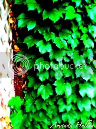 Ivy League Gardening