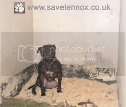Image of Lennox detained by Belfast City Council