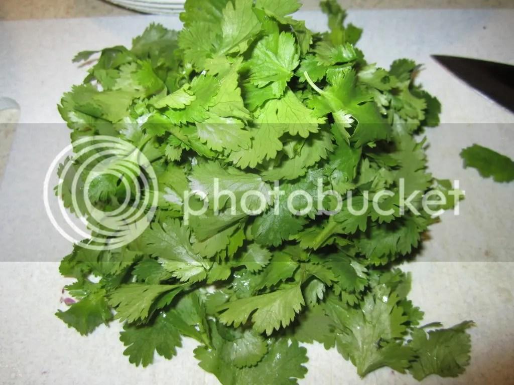 Hello cilantro
