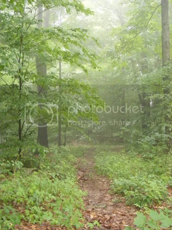 foggy woodland path