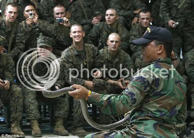 Para prajurit marinir Amerika sedang berlatih menjinakan Cobra  bahkan meminum darah ular Cobra