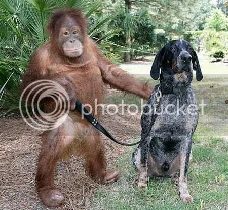 Orang Utan dan Anjing