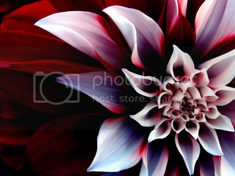 flower Pictures, Images and Photos