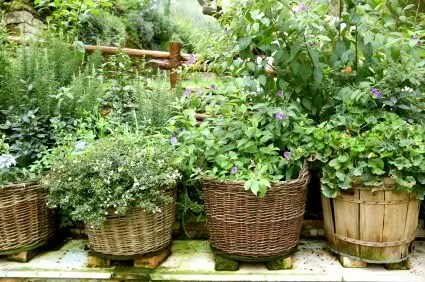 planting in baskets