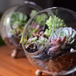 How To Make A Glass Globe Terrarium Diy Succulent Dish Garden Michaelsmakers Bystephanielynn