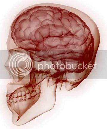 brain anatomy photo: 280820097 25254454.png