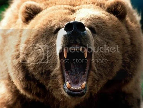 growling bear photo: BEAR species-spotlight-grizzly-bear-brown-mouth-open-black-nose-attacking-growling-biting-photo.jpg