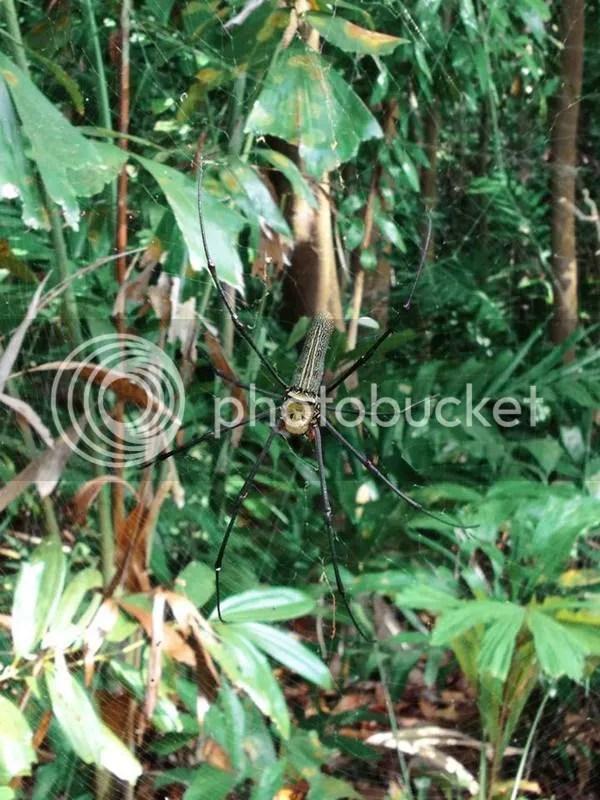 Sungei Buloh Wetland Reserve, Kranji Countryside, Singapore