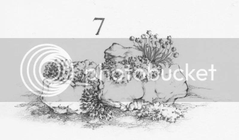 Giardino roccioso 7