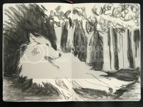 This charcoal rendering of the wolf was done across 2-pages. The lft page is the backside of the page and is smoother than the right side, which is the front side of the page. On the left, the vertical texture in the paper is more visible while on the right, the horiaontal textures are more prominent.