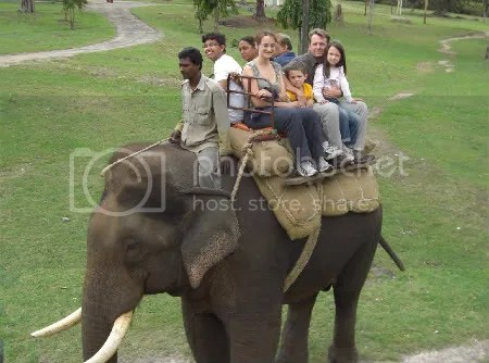 On the Elephant at Bandipur