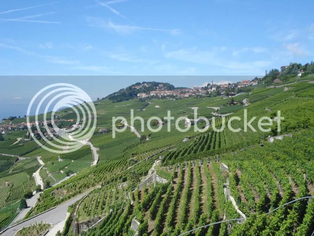wine garden vevey