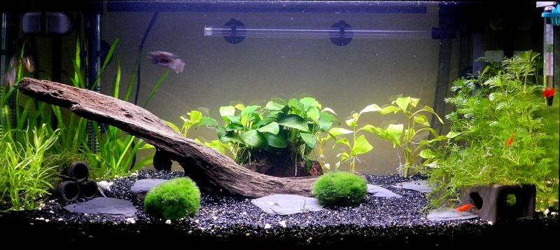 Deco Quartz Aquarium