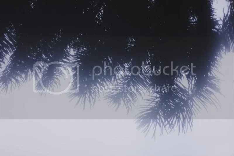photo IMG_0008.jpg