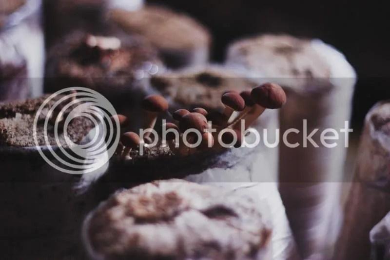 photo IMG_0349.jpg