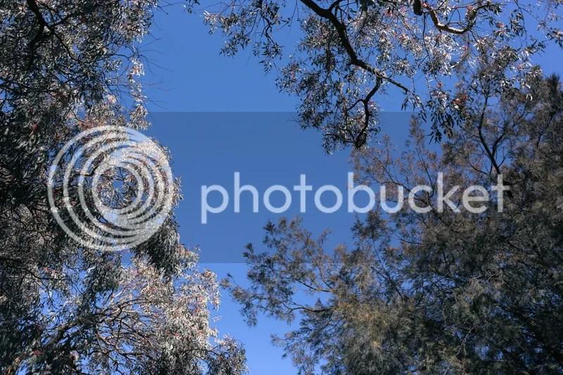 photo IMG_1021.jpg