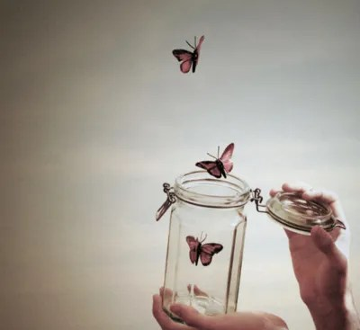 photo freebutterflies.jpg