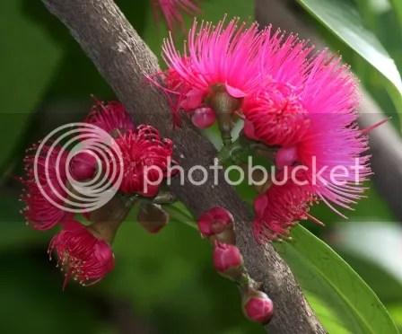 Kuncup Dan Bunga