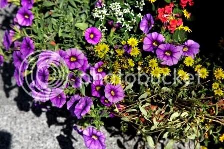 Bunga di Pingir Jalan Vaduz